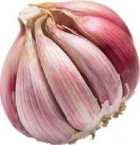 Head of Garlic final