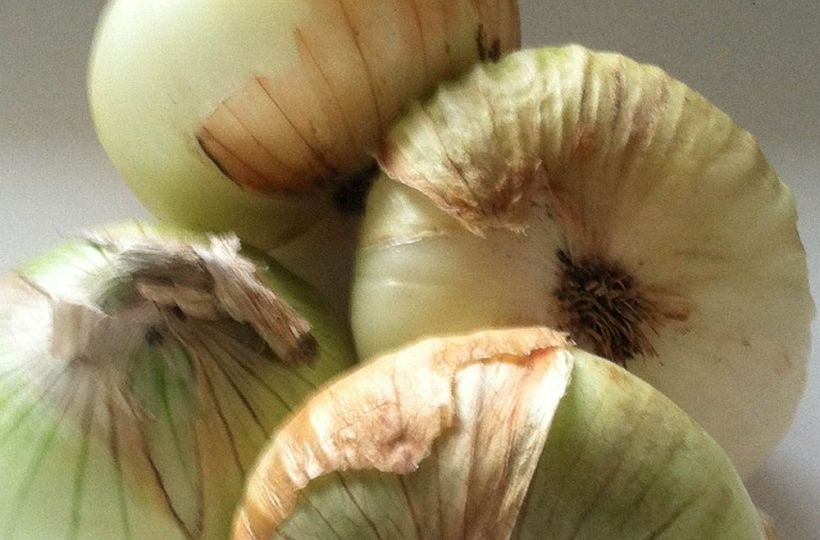 Group of Maui onions 3