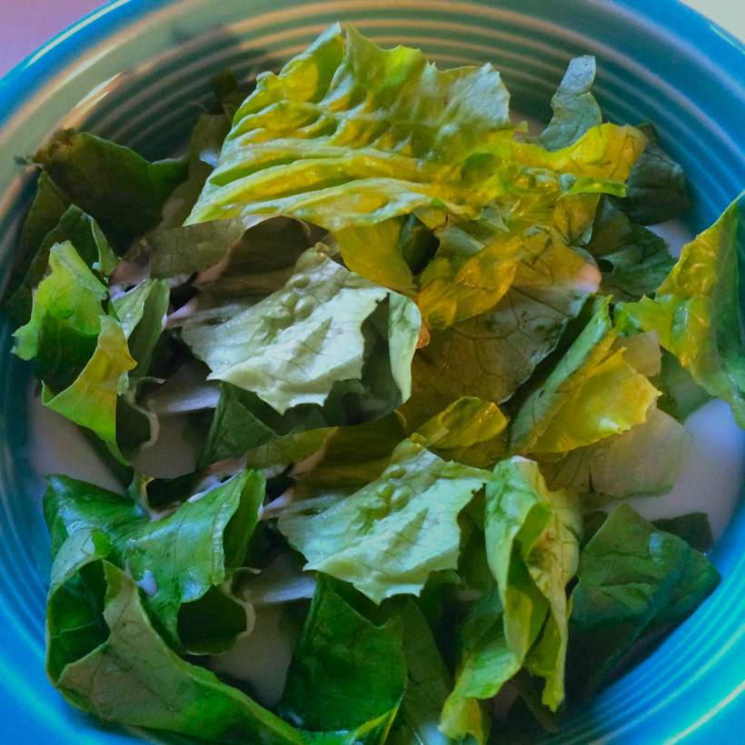 Yogurt with lettuce