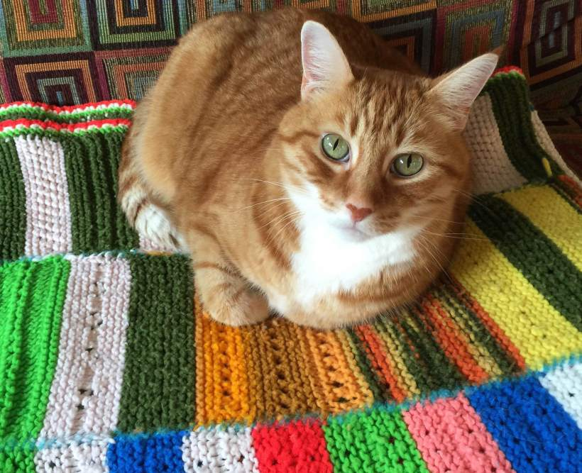 Jack on Grandma's Crazy Afghan